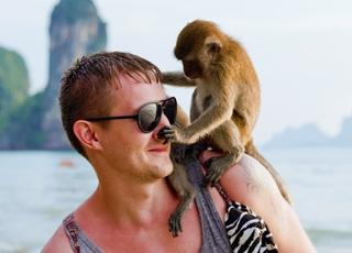 L�homme n�est-il qu�un singe plus évolué que les autres ?